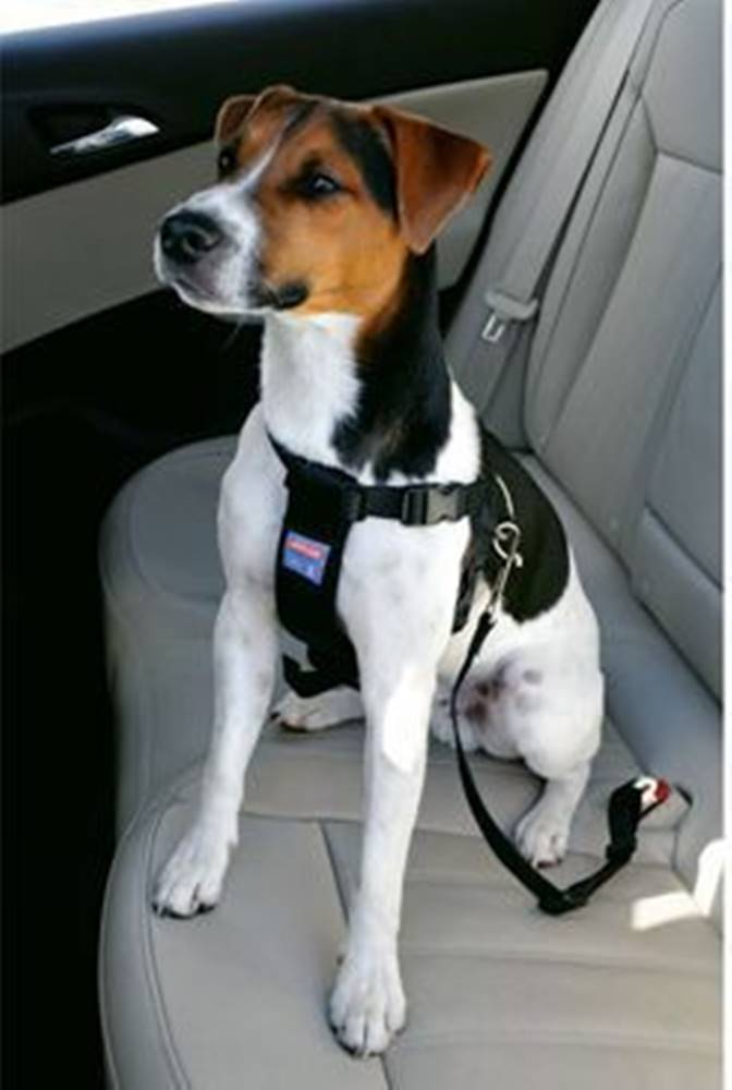 Zolux Postroj pes Bezpečnostní do auta S Zolux