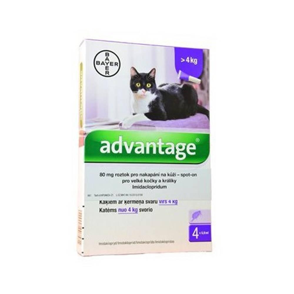 Bayer Advantage 80 10% 4x0,8ml pro kočky nad 4kg